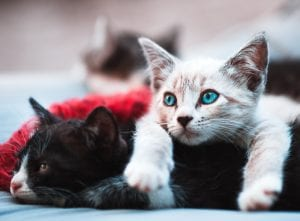 Natural Pet Doctor cat health