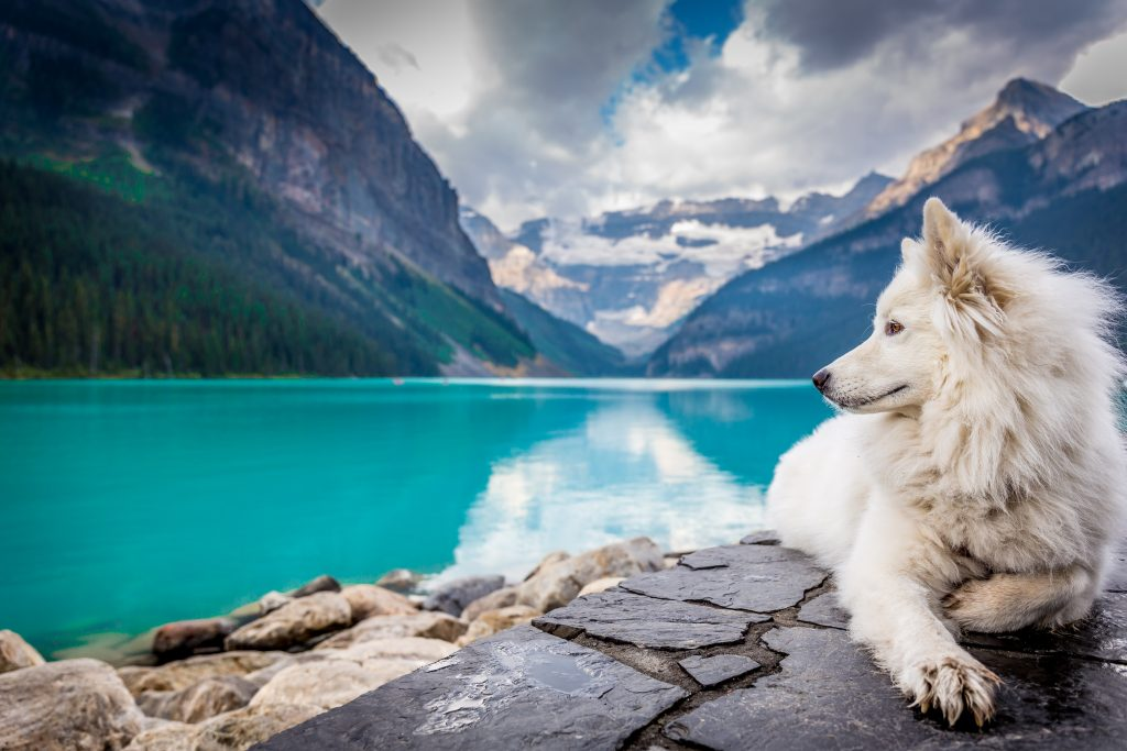 Healthy pet in nature